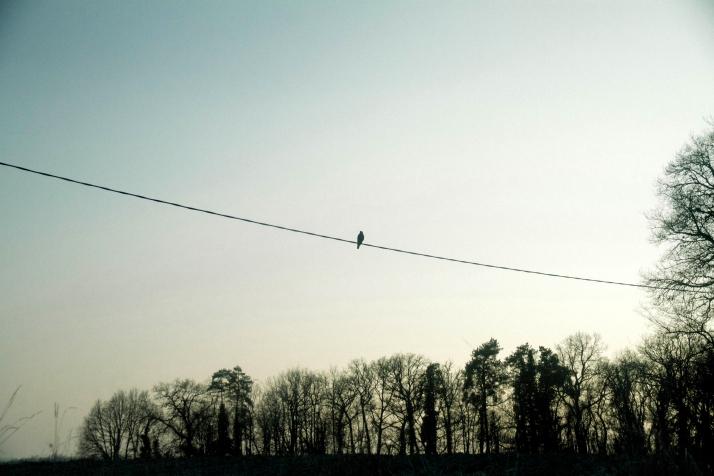 2015_03_Life-of-Pix-free-stock-photos-bordeaux-cable-bird-sky-Sarah-Babineau